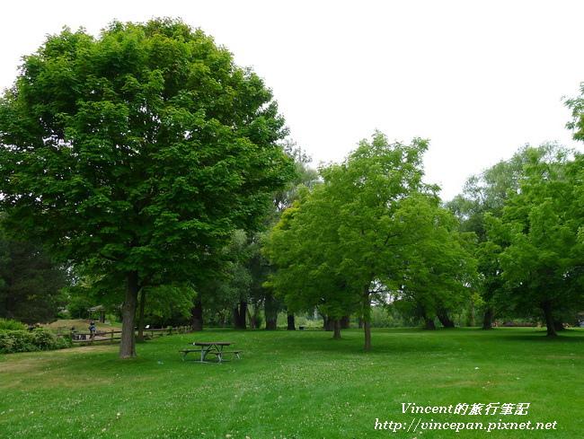 溫帶灌木2
