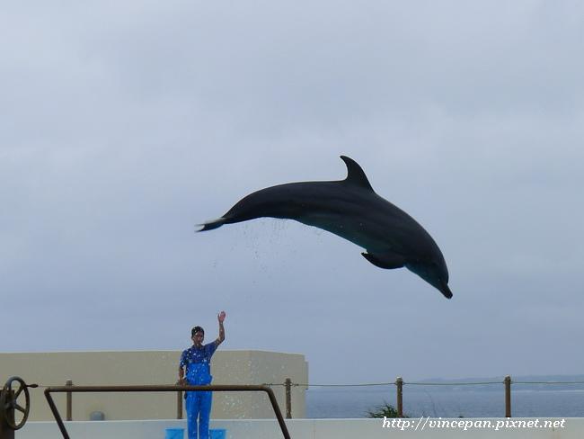 海豚練習1