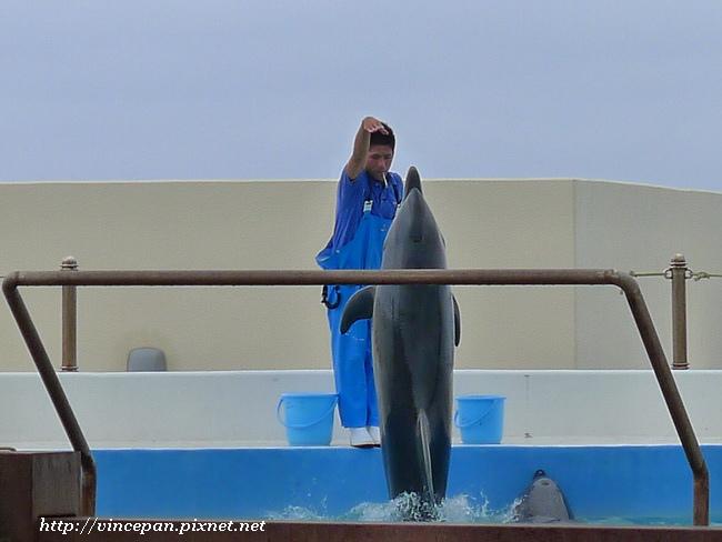 海豚練習2