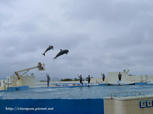 開場海豚跳出