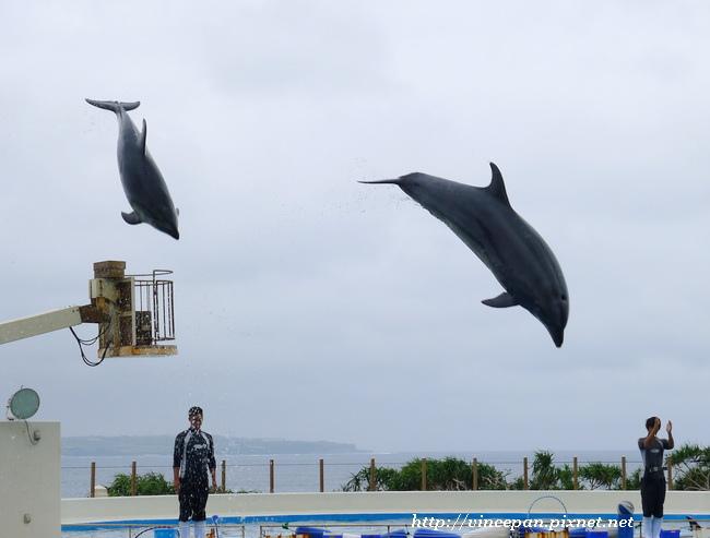 海豚越出水面