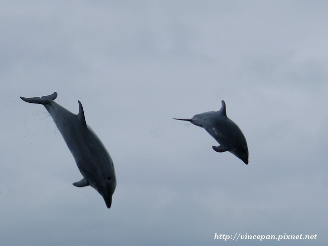 海豚越出水面2