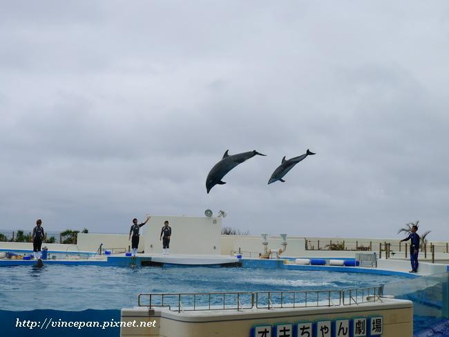 海豚越出水面散場