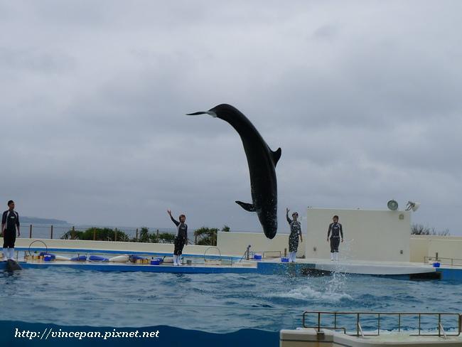 擬虎鯨跳躍 散場