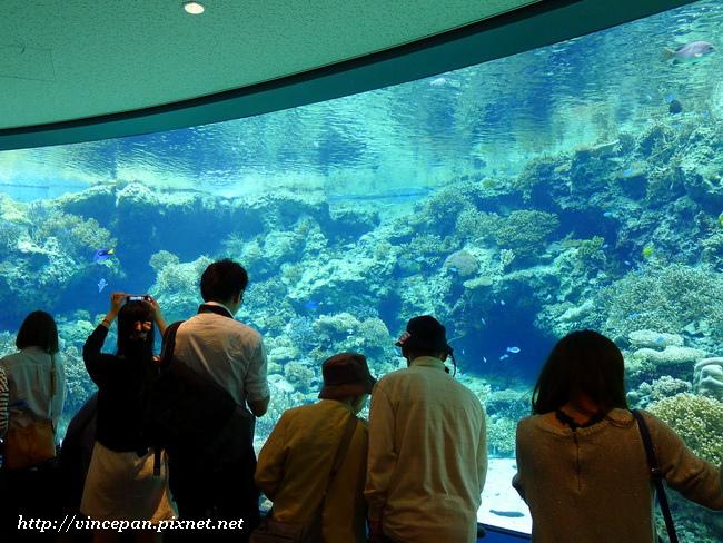 珊瑚之海 遊客