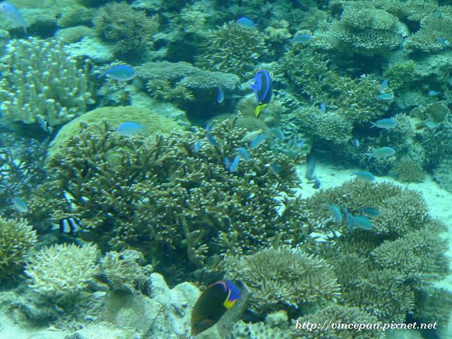 熱帶魚之海1