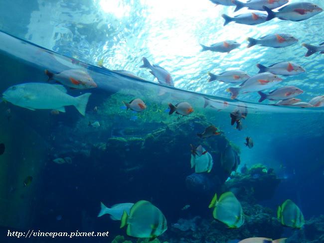 熱帶魚之海3