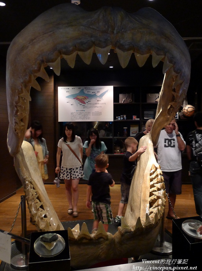 鯊魚牙齒標本