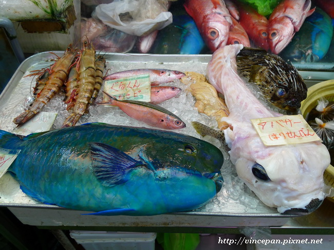 熱帶魚 河豚