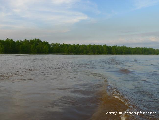 紅樹林河道