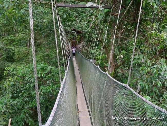 樹頂吊橋2
