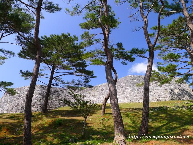 松樹與古城