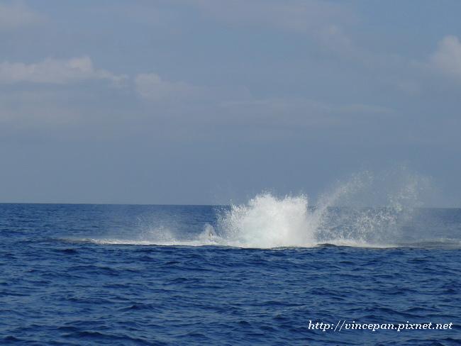 鯨魚浪花2