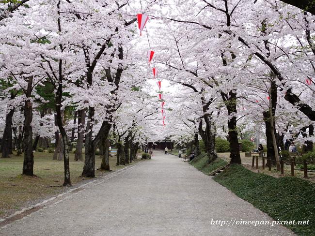 千秋公園 櫻花
