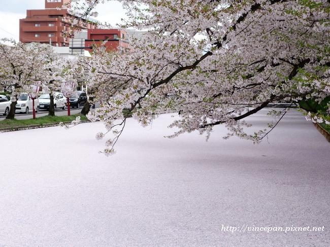 弘前櫻花絨毯