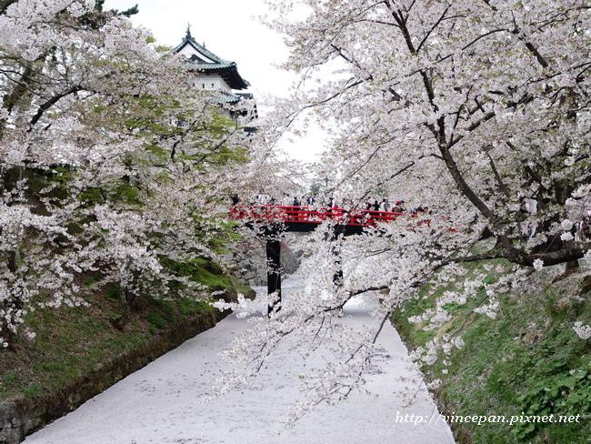 弘前櫻花絨毯2