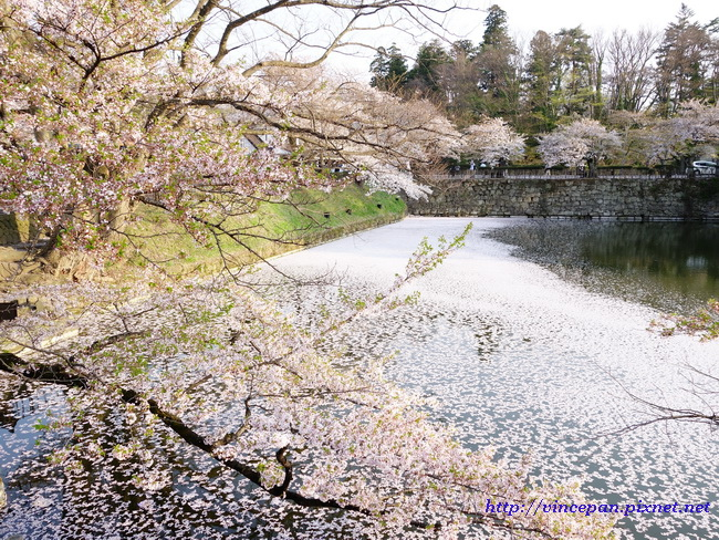 護城河櫻花1