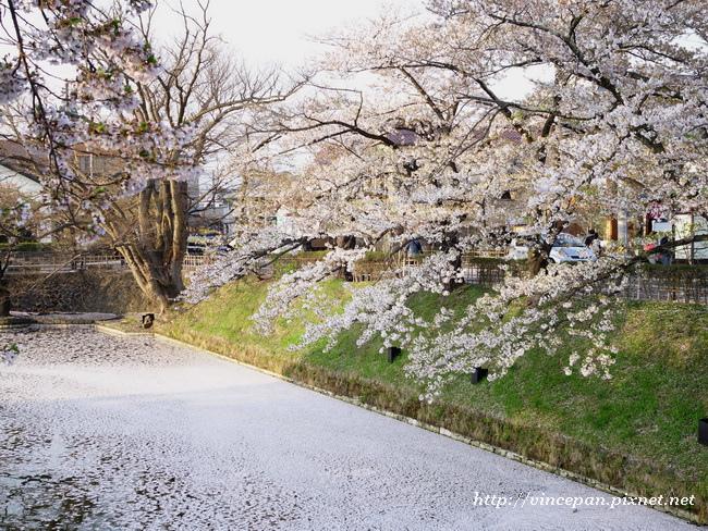 護城河櫻花3