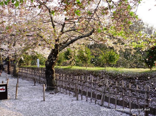 椿坂櫻吹雪