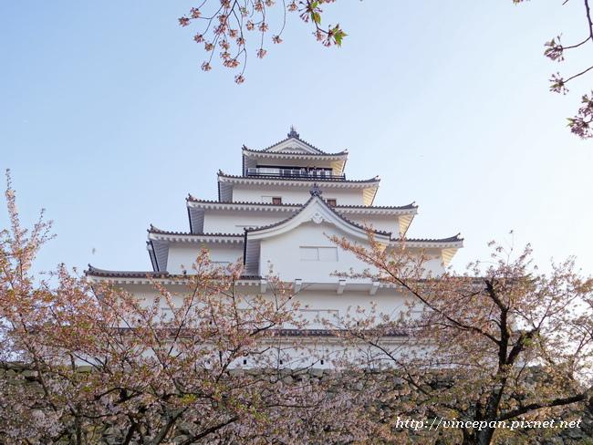 會津若松城 櫻花3