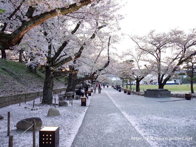 櫻花 走道