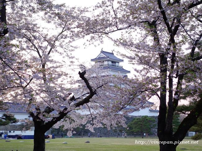 會津若松城 櫻花5