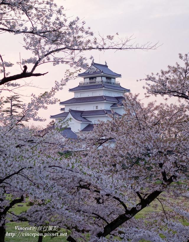 會津若松城 櫻花7