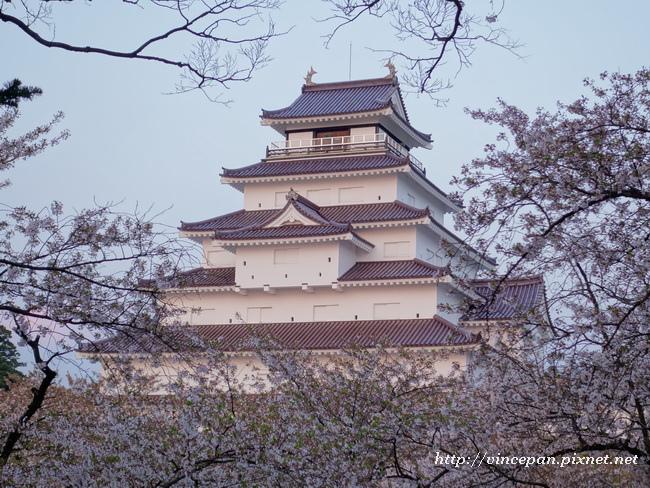 會津若松城 櫻花8