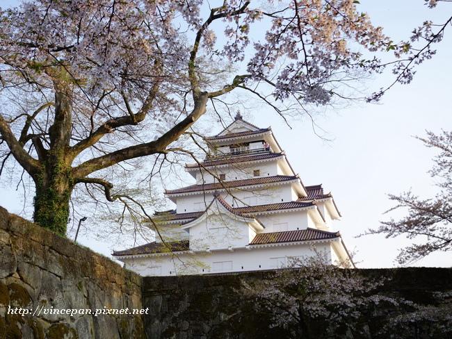 會津若松城 櫻花