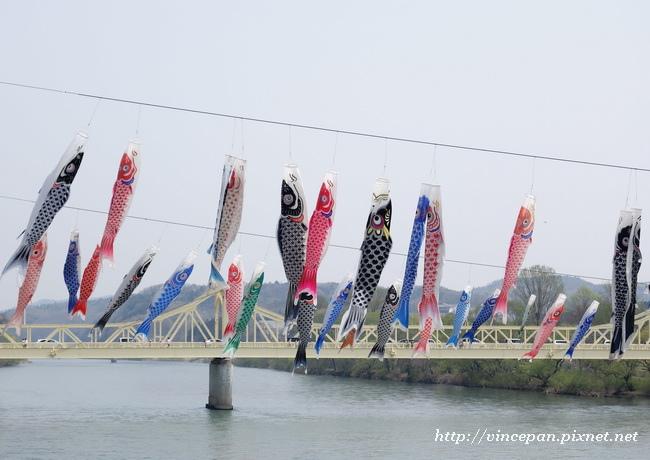 珊瑚橋 鯉魚旗