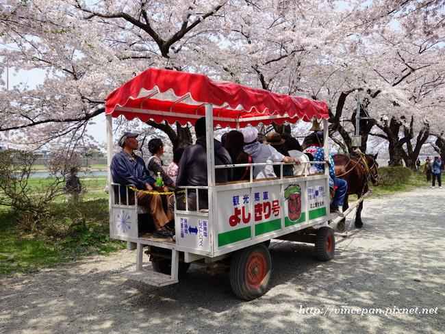 賞櫻馬車2