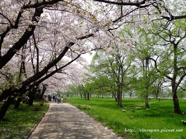 河岸步道新綠.2