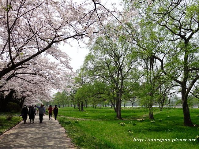 河岸步道新綠.3