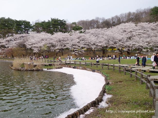 高松の池 花毯2