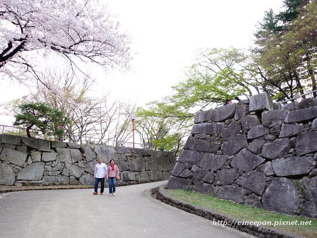 石垣 櫻花 楓樹