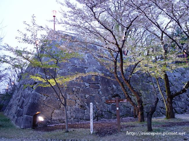 石垣 櫻花 夜1