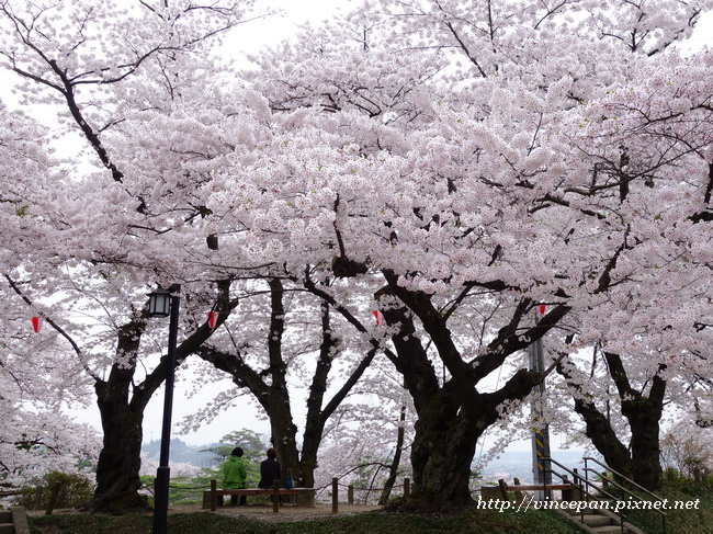 千秋公園 表門入口 櫻花