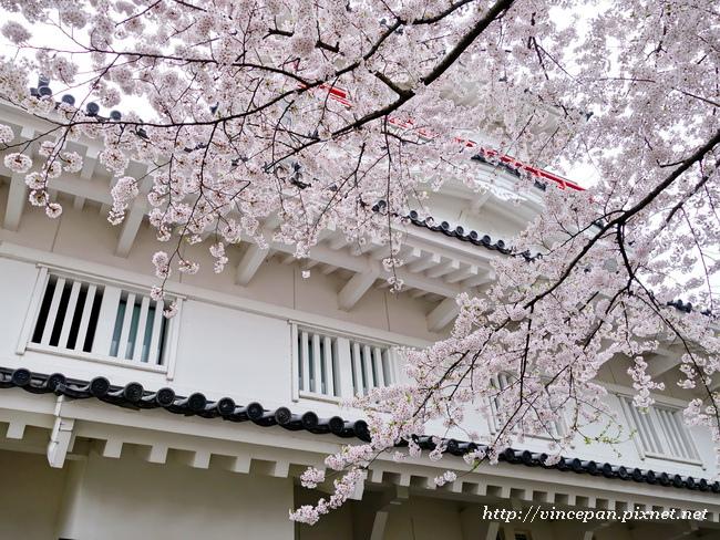 御隅櫓 櫻花