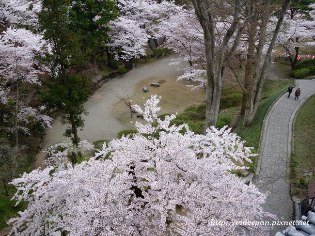 御隅櫓 櫻花1