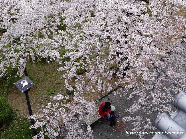 御隅櫓 櫻花2