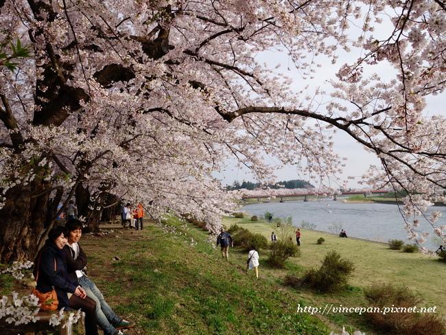 檜木内川堤 櫻花 遊客1