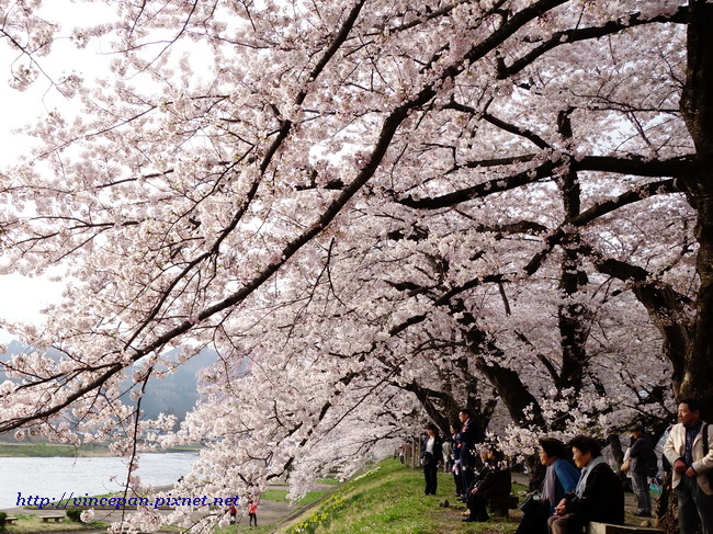 檜木内川堤 櫻花 遊客