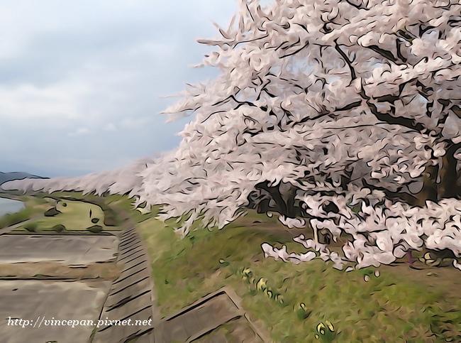 桧木内川堤櫻花 特效2