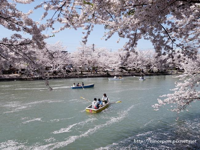 划船 櫻花4
