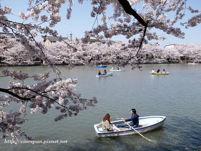 划船 櫻花5