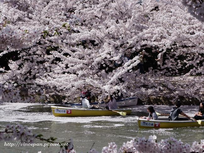 划船 櫻花1