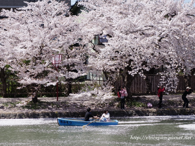 划船 櫻花3