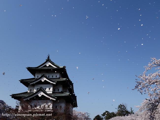 弘前  櫻吹雪3