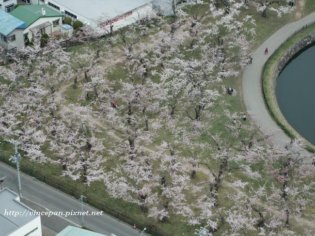 櫻花 俯瞰