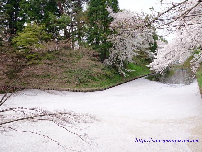 中濠櫻花絨毯2